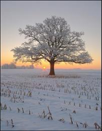 The lonesome oak [2]