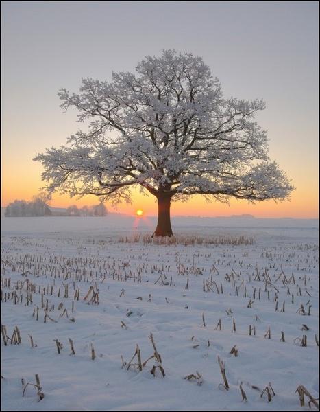 The lonesome oak [2] by PeterK001
