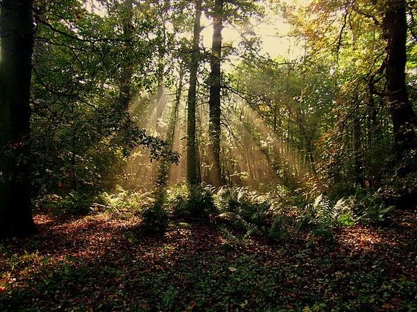 Shining light by vickyal