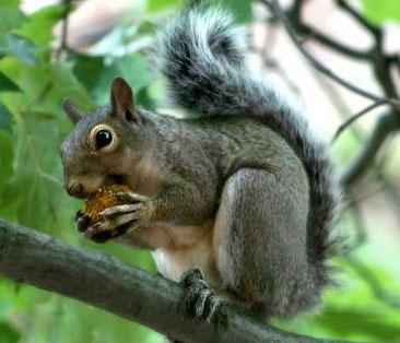Squirrel by cnc1