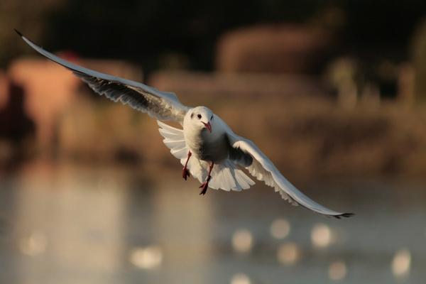 flying free by blacklug