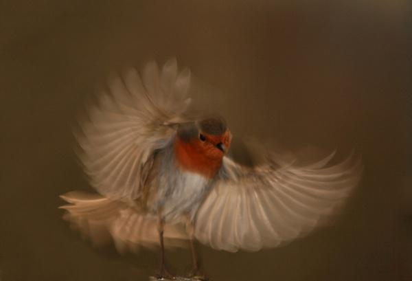 Take off by blacklug