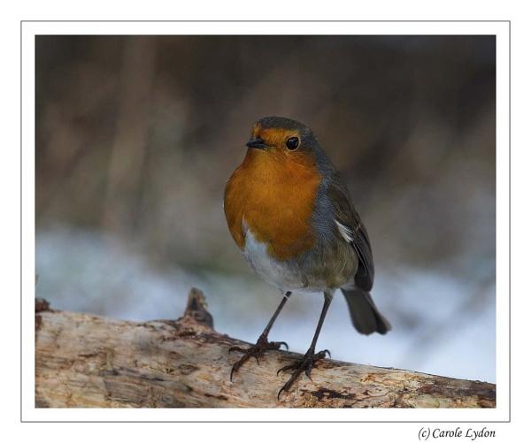 My Robin! by Karrol
