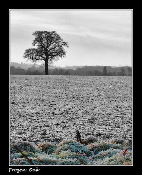 Frozen oak by Swanvio