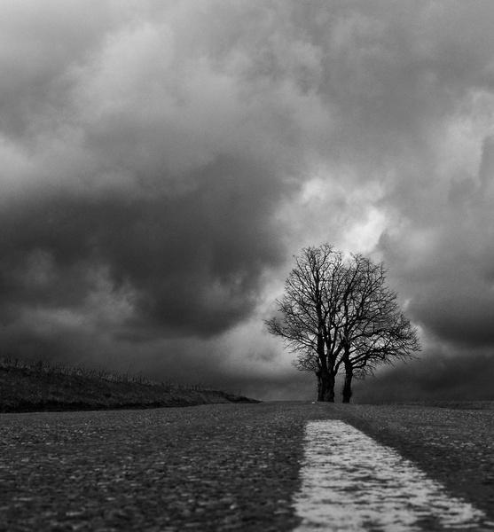 Two Trees by rhobbie