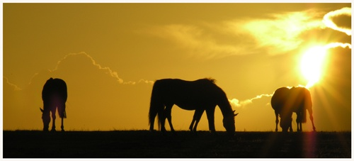 horses in sunset by davekeen
