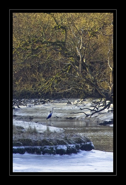 The Lonely Heron by aeast