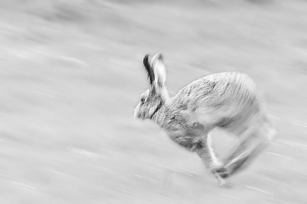 Ghostly hare by roseyemma