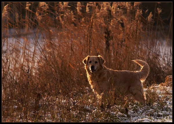 Backlit Beauty by conrad
