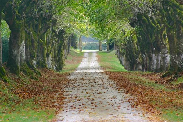French Driveway by stuart davies