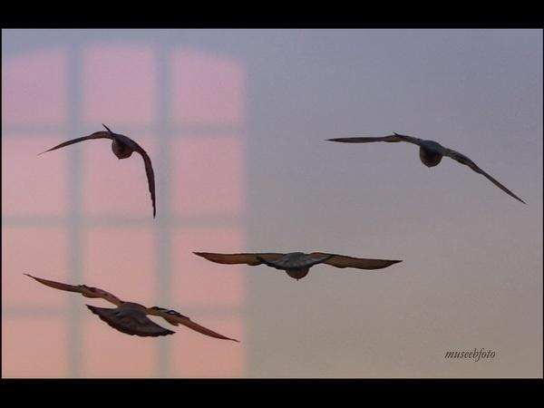 Landing by museebfoto