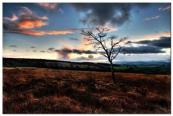 Little Haldon Sunset by RockArea