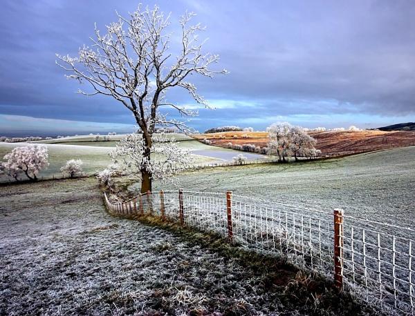 Winter Day II by NeilM