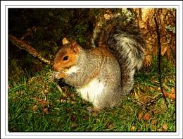 Squirrel  & sunlight
