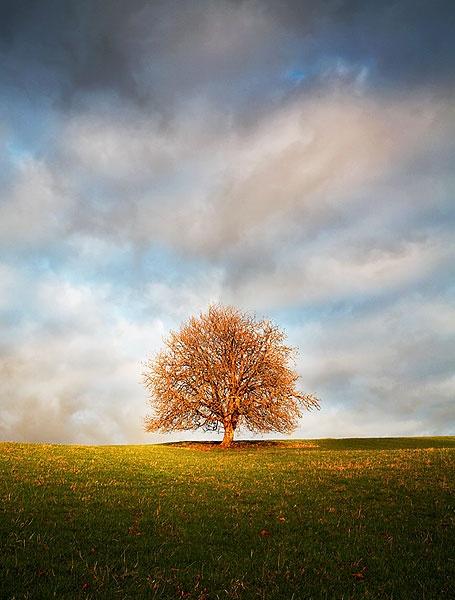 Lone Tree by Kris_Dutson