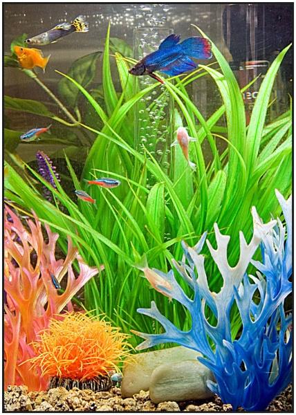 Fish Tank by Stuart463