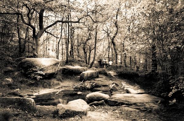Lost in Woods by Boyoclark