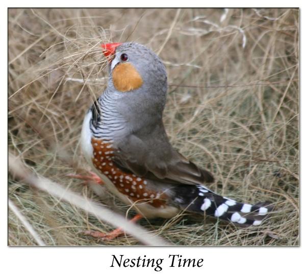 Nesting Time by Bravdo