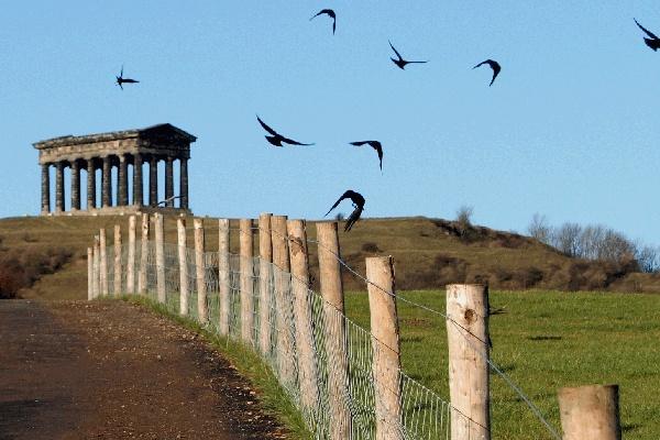 Penshaw Crows by PostmanPat