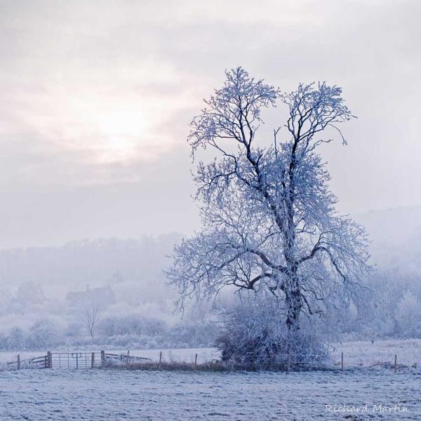 Frozen tree by richardolivermartin
