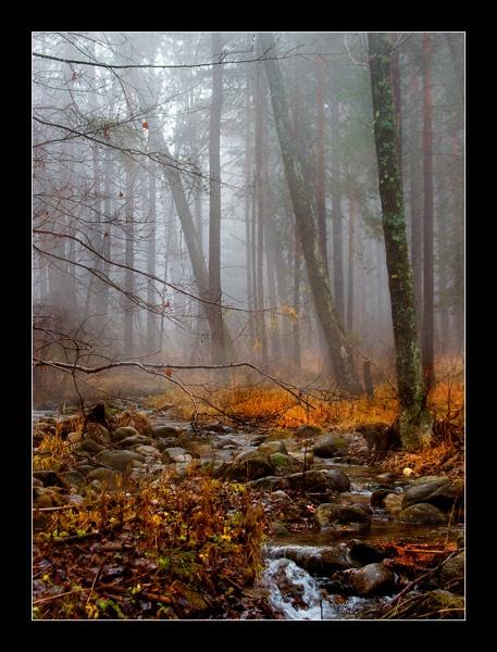 Mist by Dimitre_P