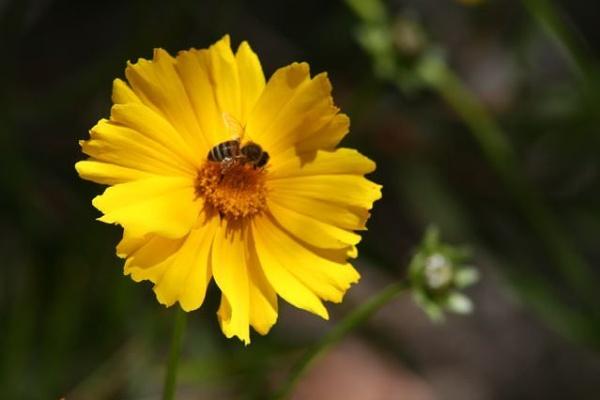 Flower & Bee by x_posure