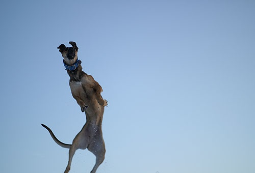 Everybody !Jump! by vogelsang