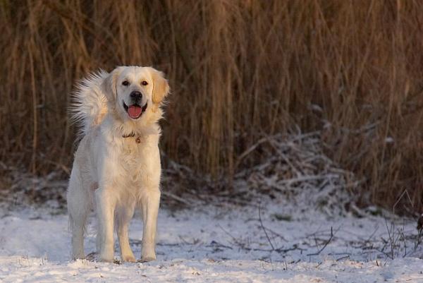 Joy of Winter (Re-post) by conrad