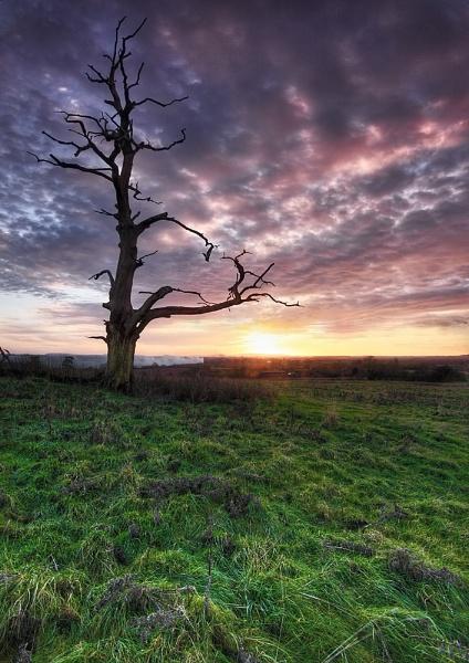The Dead Tree by DouglasLatham