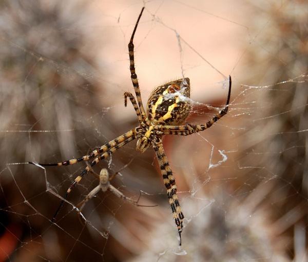 SPIDER by BillM