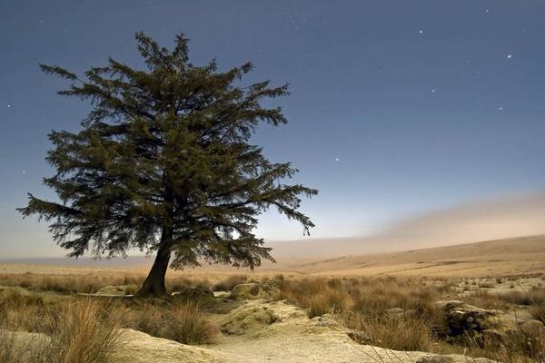 Dartmoor Desert by lakemans