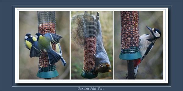 garden nut fest by Mynett