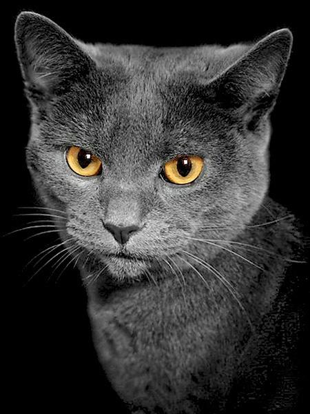 The Cat by clintnewsham