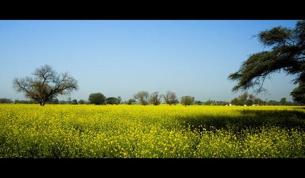 Farm at Nahar, haryana, India by nitinhopeindia