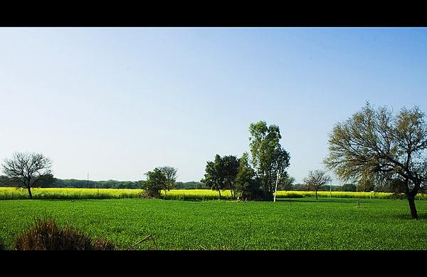 Green Farm, Nahar, Haryana India by nitinhopeindia