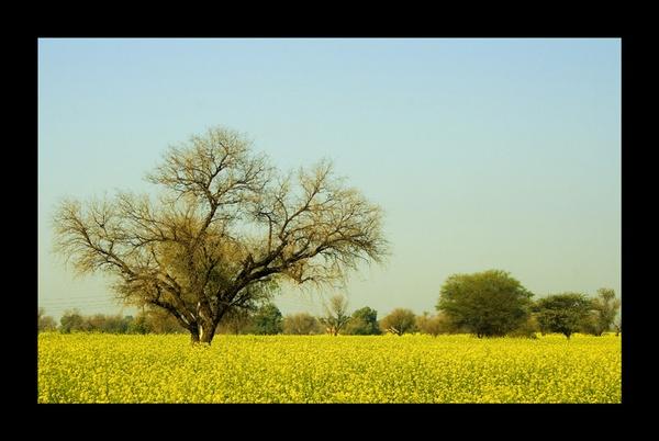 Nahar, Haryana, INDIA by nitinhopeindia