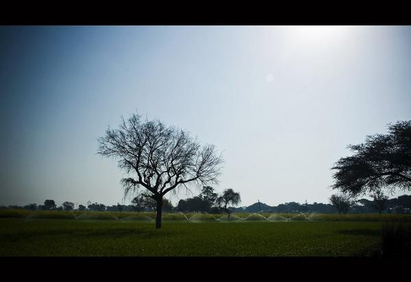 fields by nitinhopeindia