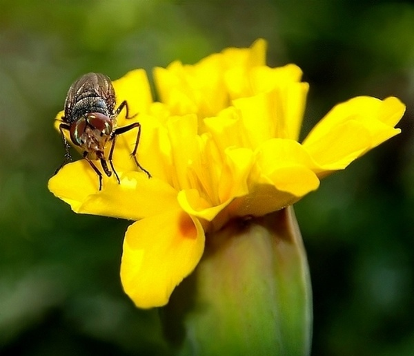 Fly on the flower 2 by RTDS