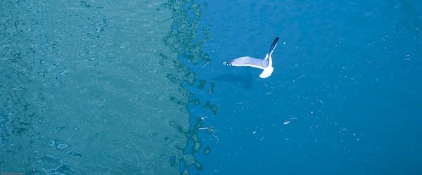 Seagull by nikguyatt