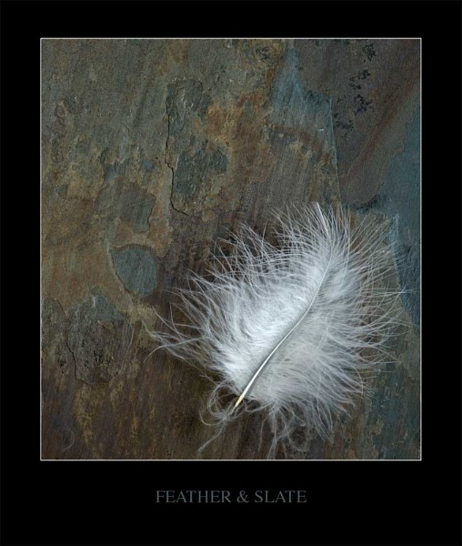 Feather & Slate by charlotte