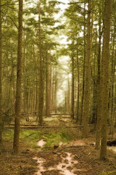 Woodland Path by wheeldon