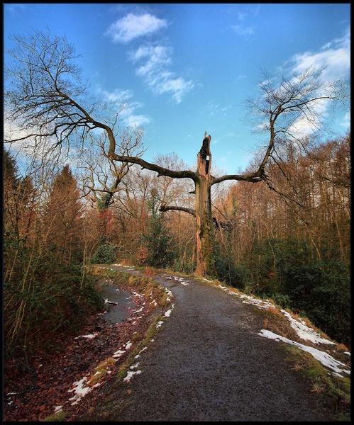 Scary Tree by mjstead