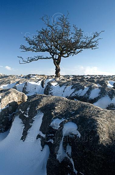 Tree with a seasonal twist by Megrez