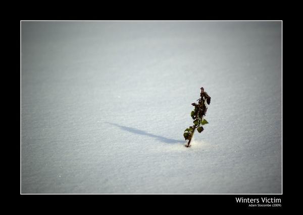 Winters Victim by adslocom