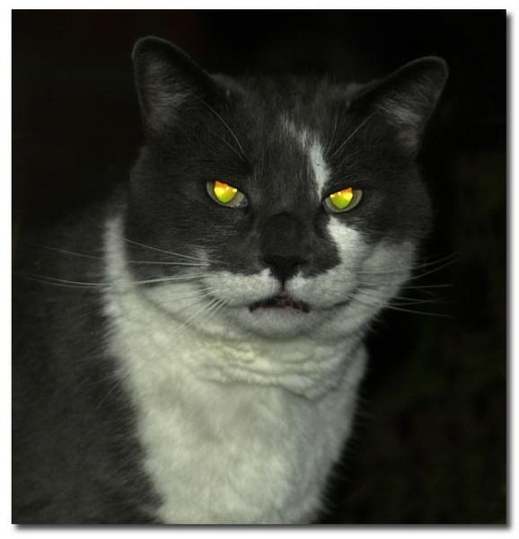 cats eyes by patman