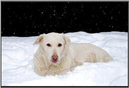 Misty the Snow Dog
