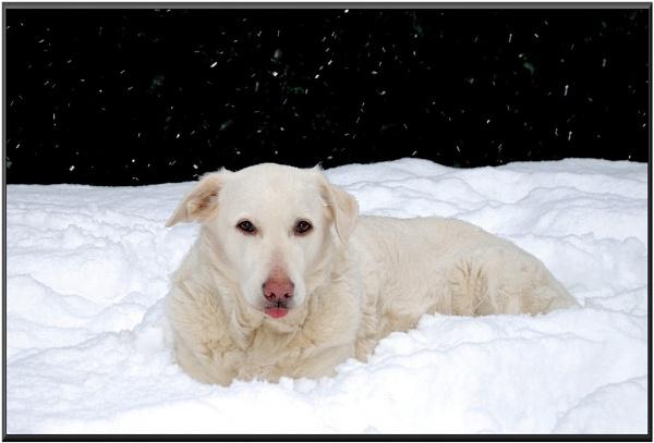 Misty the Snow Dog by trissie