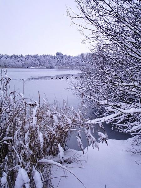 Winter Scenery by FredF