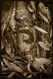 Tree Bark and Leaves
