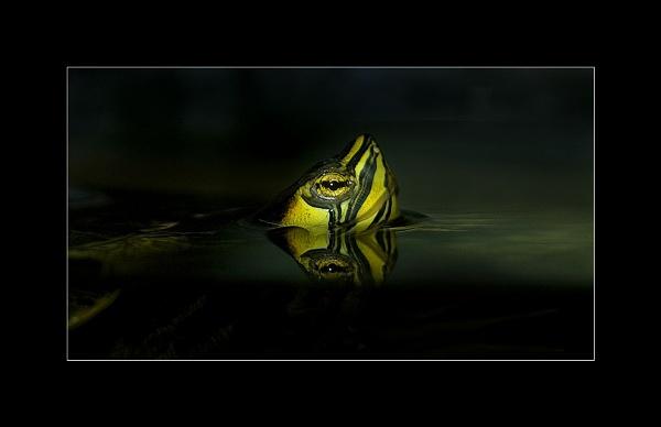 Yellow Terrapin by Scaramanga